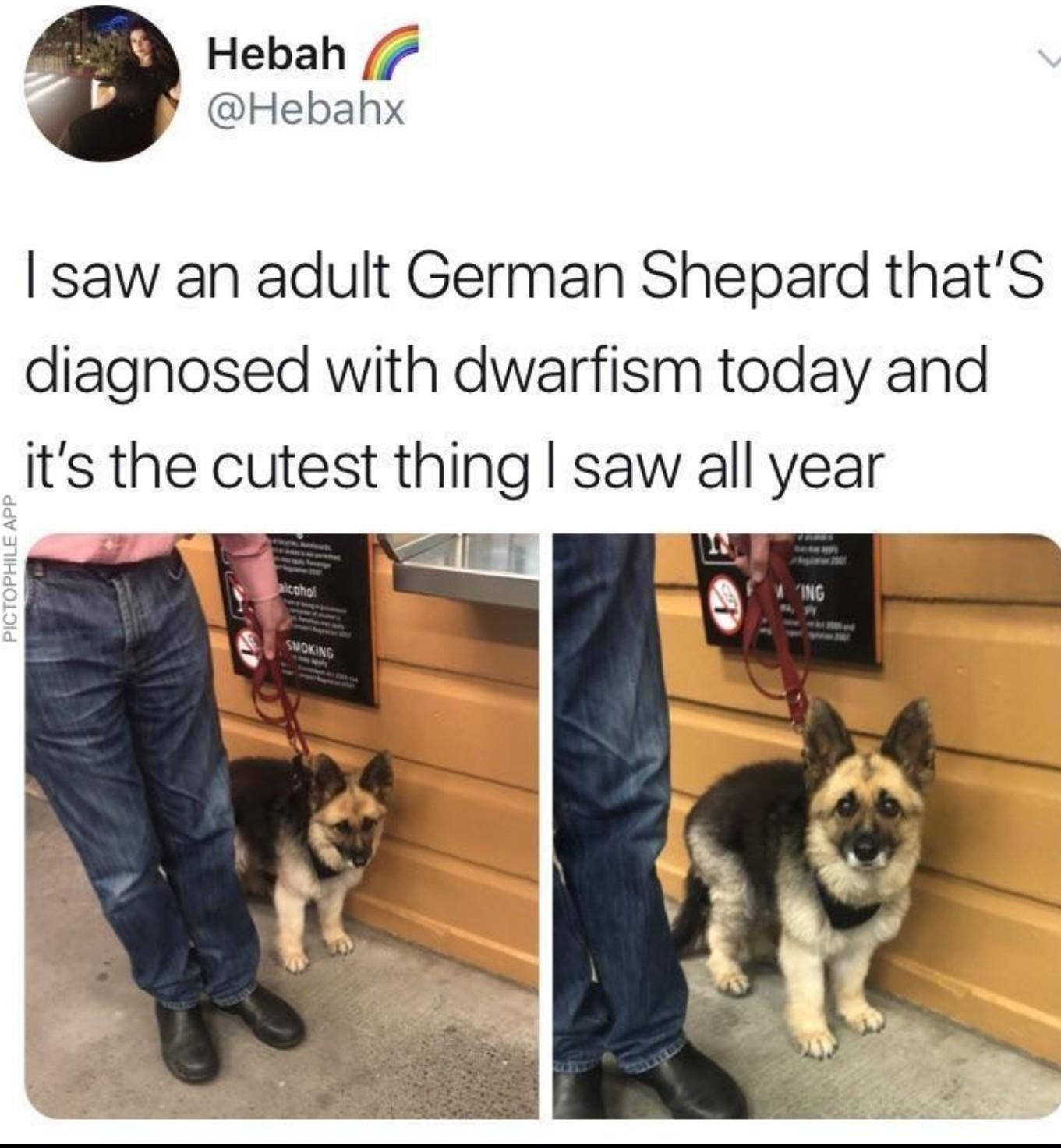 Cute doggo - meme
