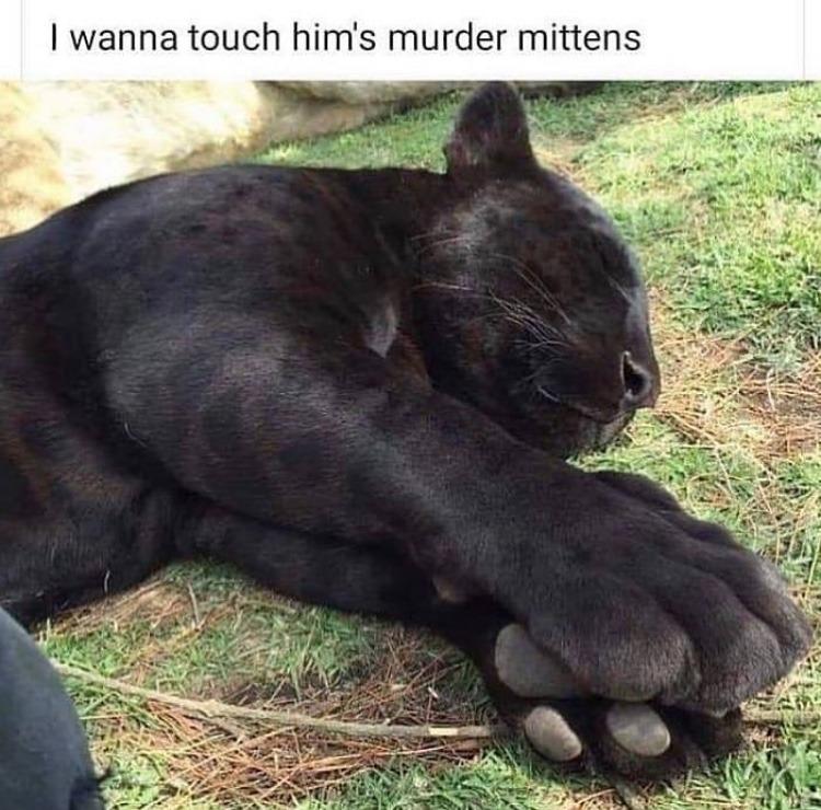 toe beans - meme