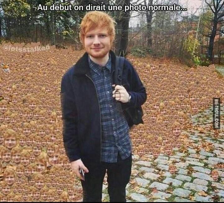 Oui ce sont des feuilles - meme