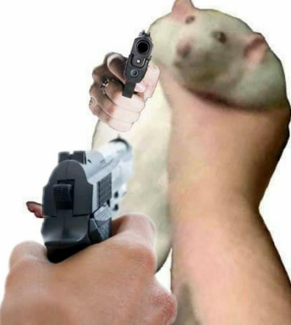 Ratón gordo - meme
