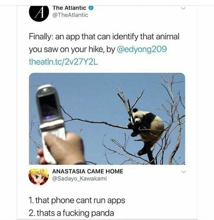 That's a fukin fox... - meme