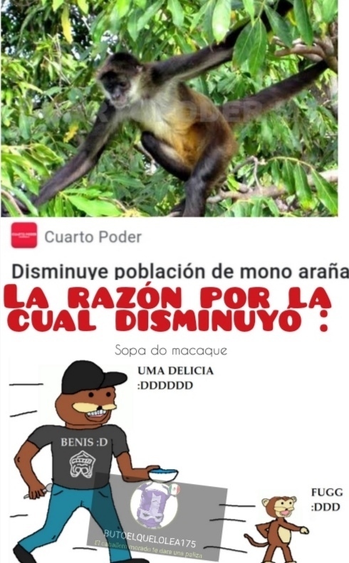 Sopa do macaque uma delicia - meme