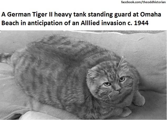 Tank catto - meme
