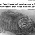 Tank catto