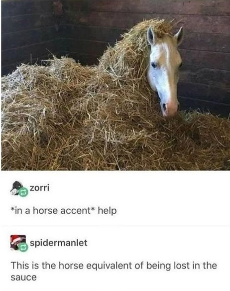horse gets lost in the sauce - meme