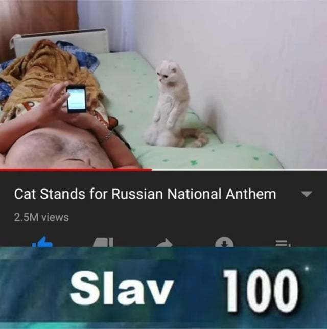 Cat stands for Russian national anthem - meme