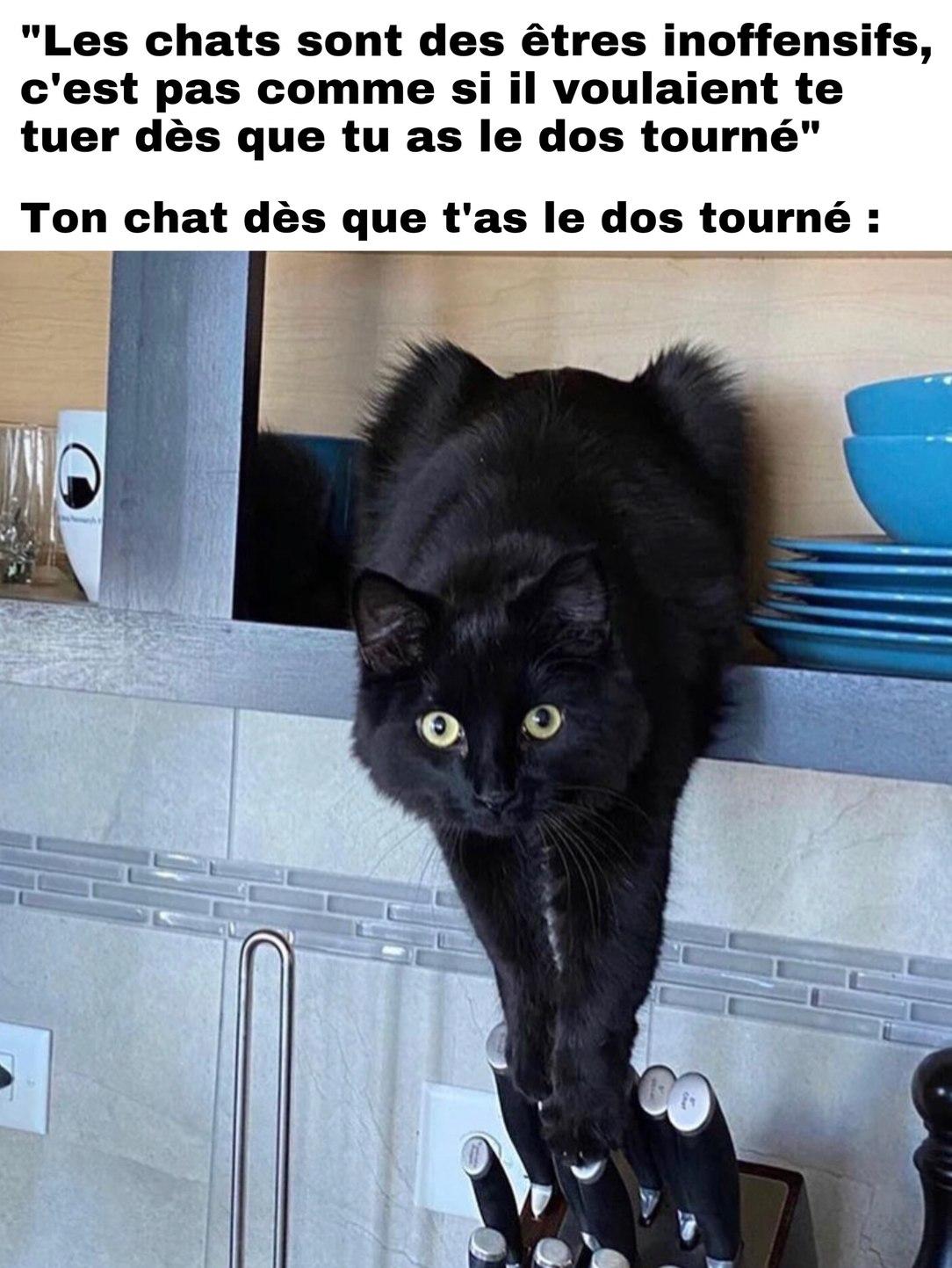 team chat! - meme