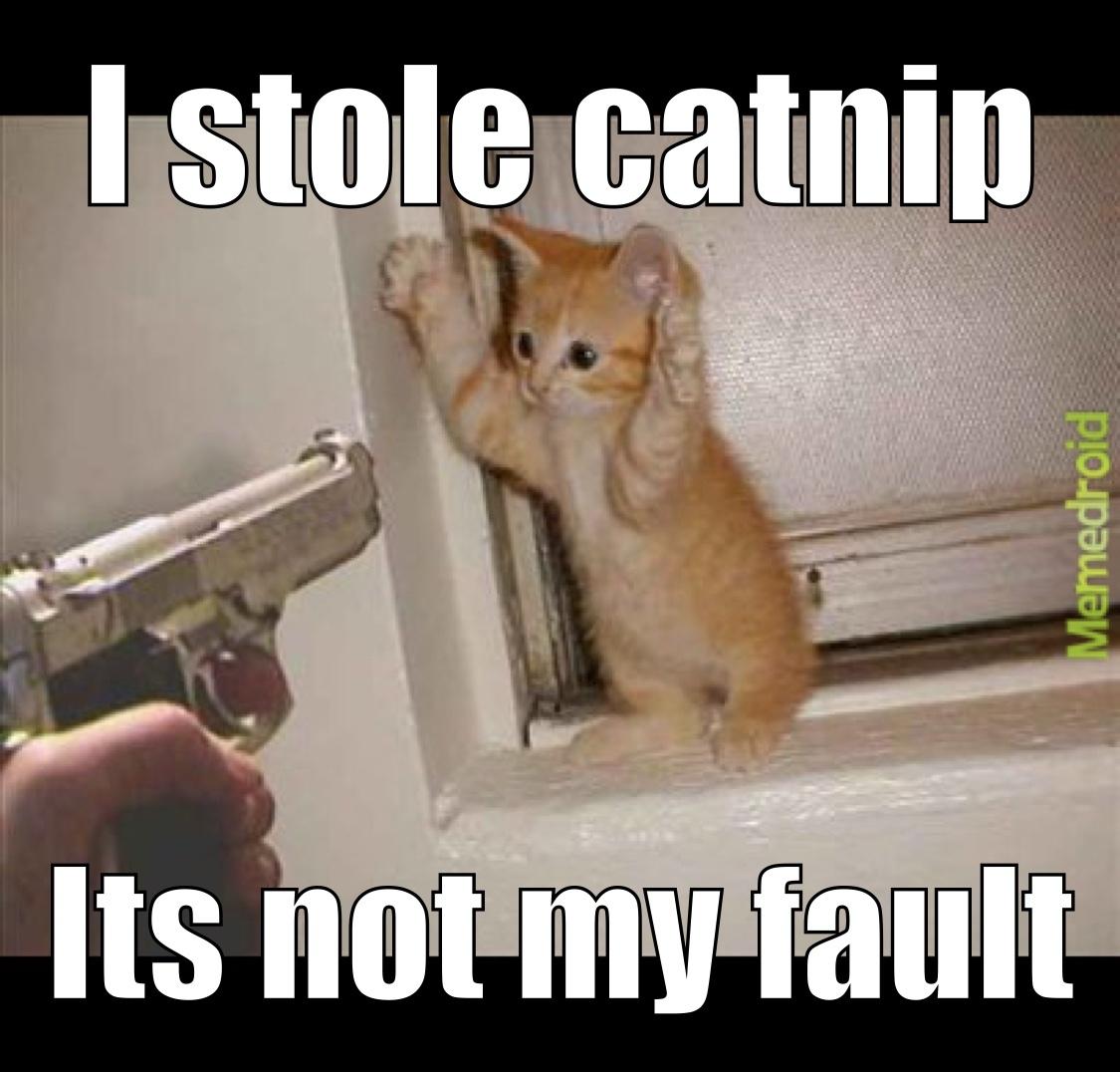 Kitten Criminal - meme