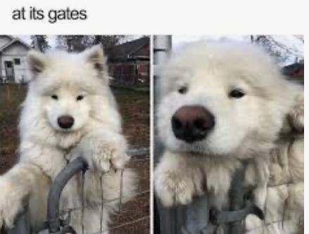 Who's a good boy - meme