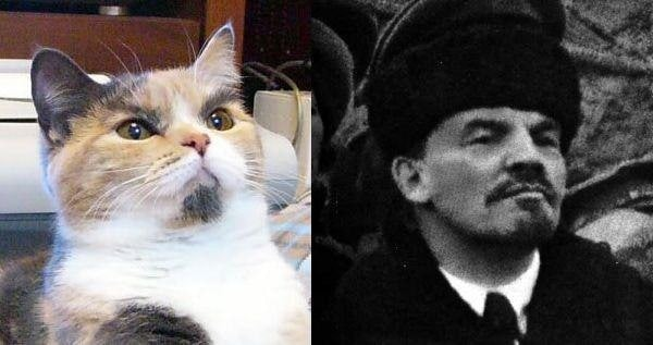 This cat is ready to kill the burgeois - meme