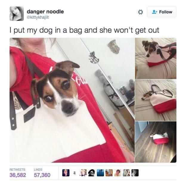 Bagged dogge - meme
