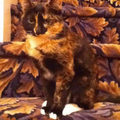 This cat has the perfect camouflage