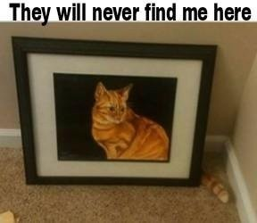 Sneaky cat - meme