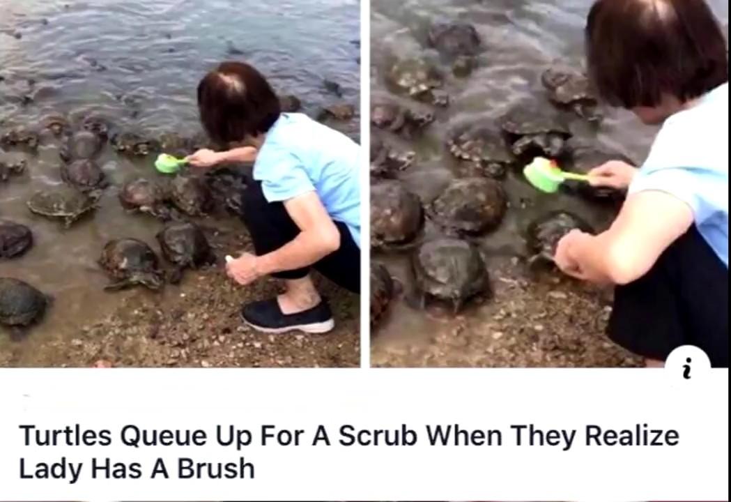 Turtle scrubs - meme