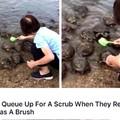 Turtle scrubs