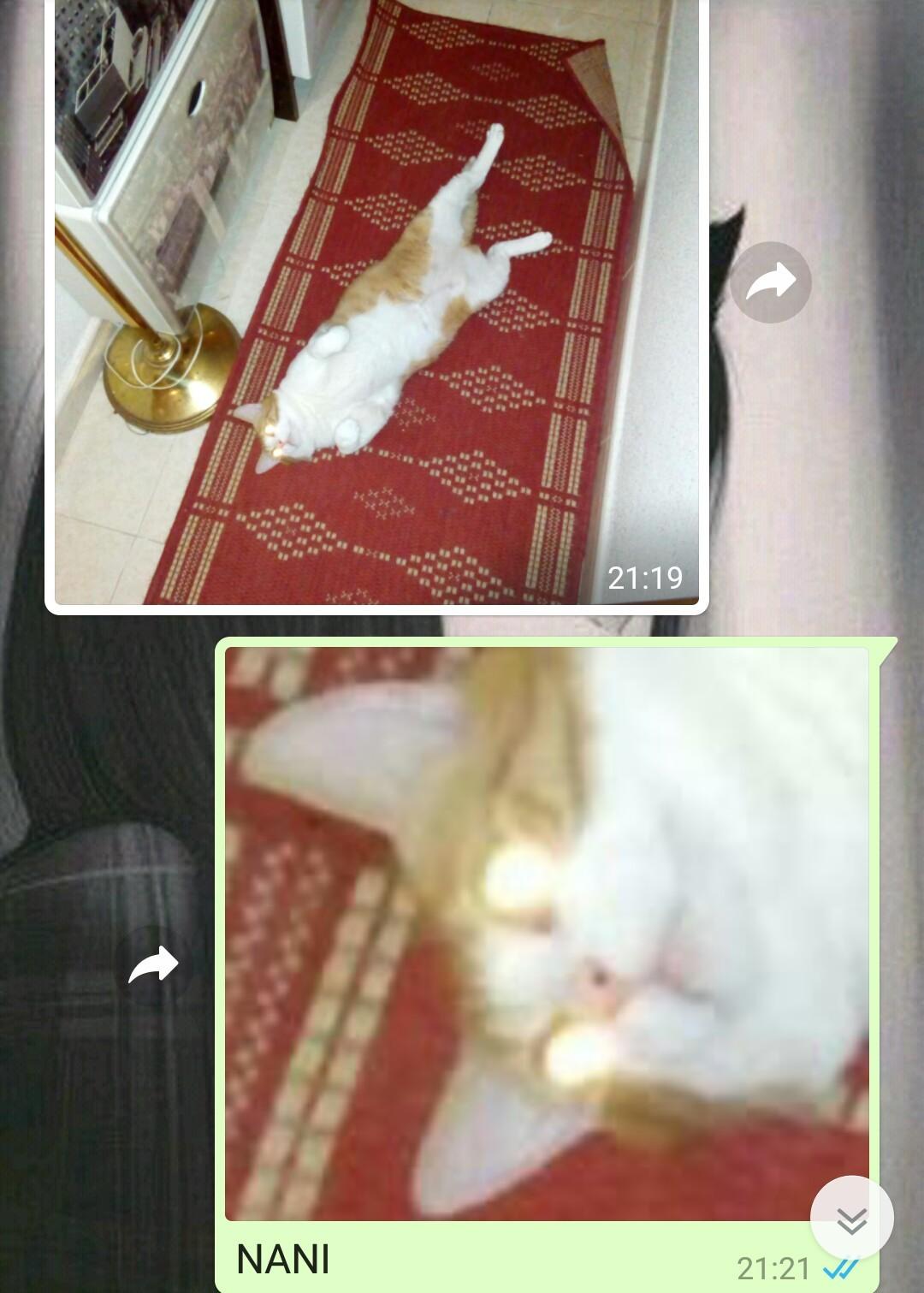 Posa, gato :v - meme
