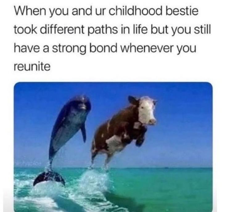 sea cow - meme