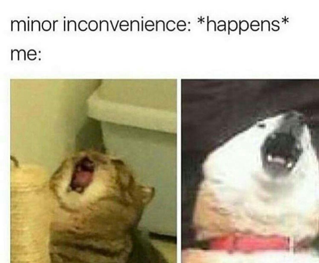 someone help me - meme