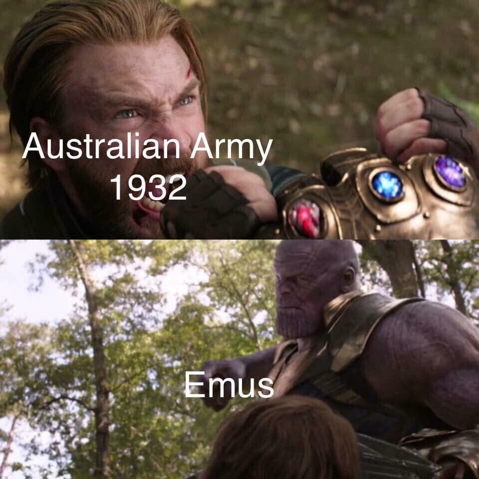 emus - meme