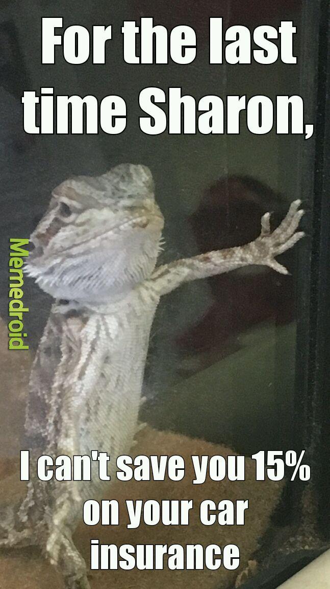 Title is not a gecko - meme