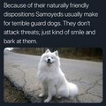 Bad guard doggo, but good doggo