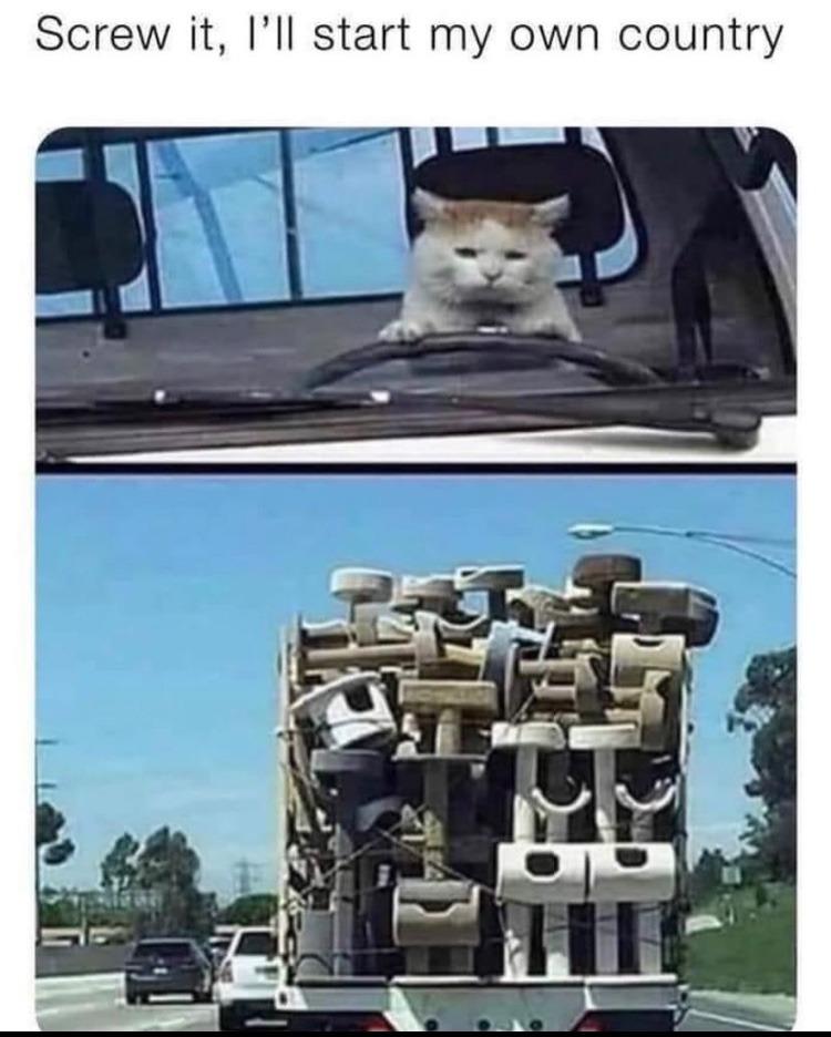 catopia - meme
