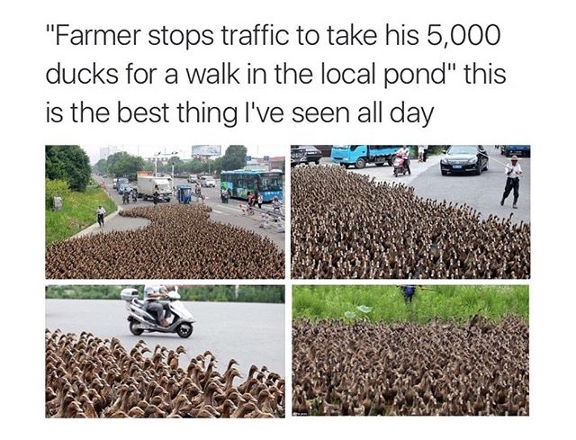 Look at all those chickens! - meme