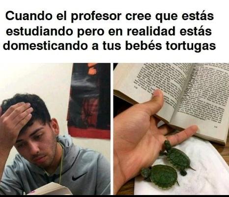 Cuidando tortugas - meme