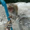 Legalicen la sopa du macaco