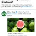 título foi plantar melancia