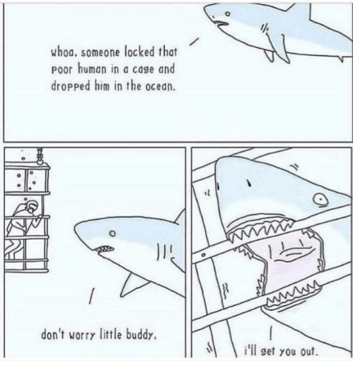 little shark friend - meme