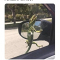 geico can save you 15% on car insurance