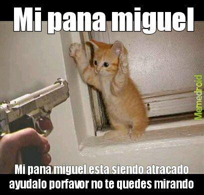 Mi pana Miguel - meme