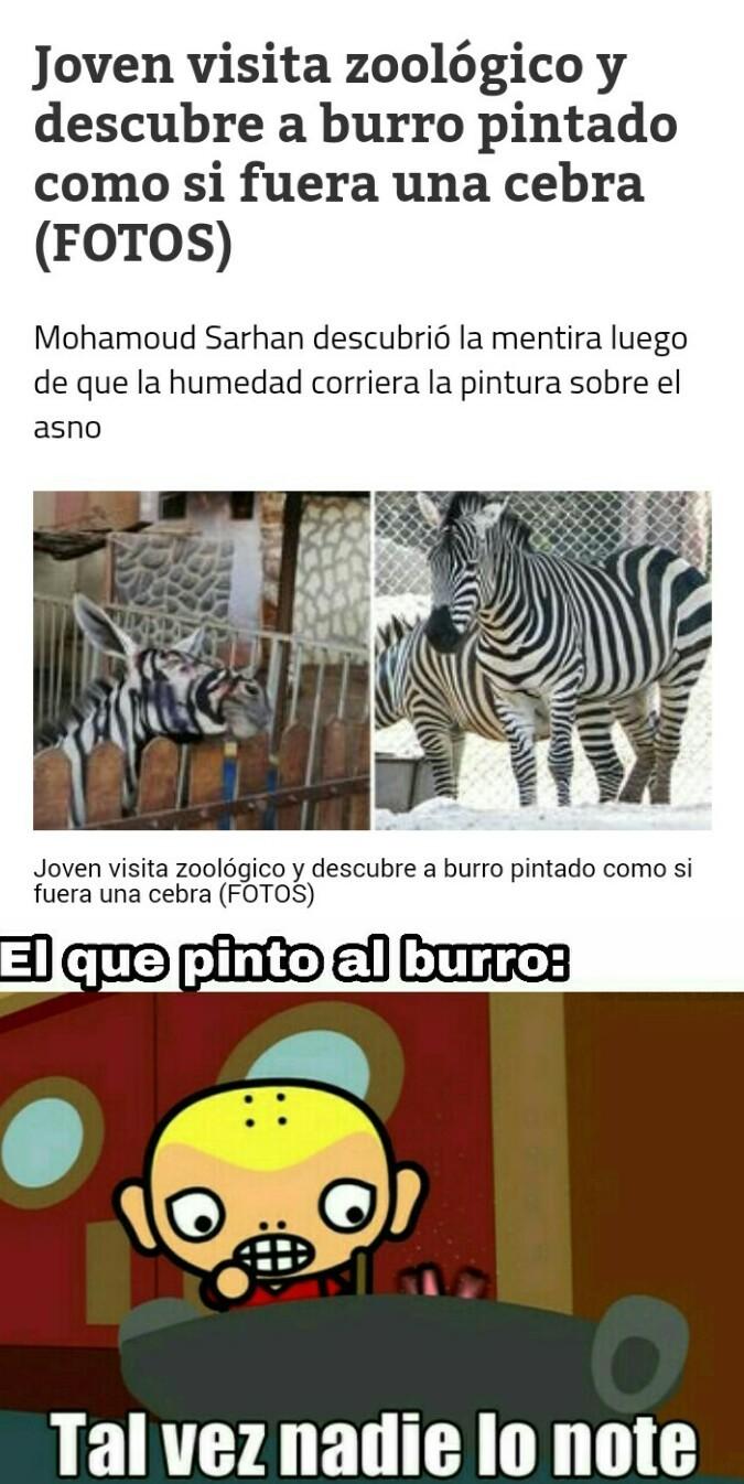 Burro peruano - meme
