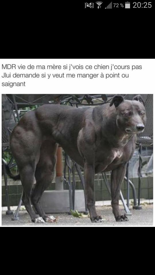 Ce chien la - meme