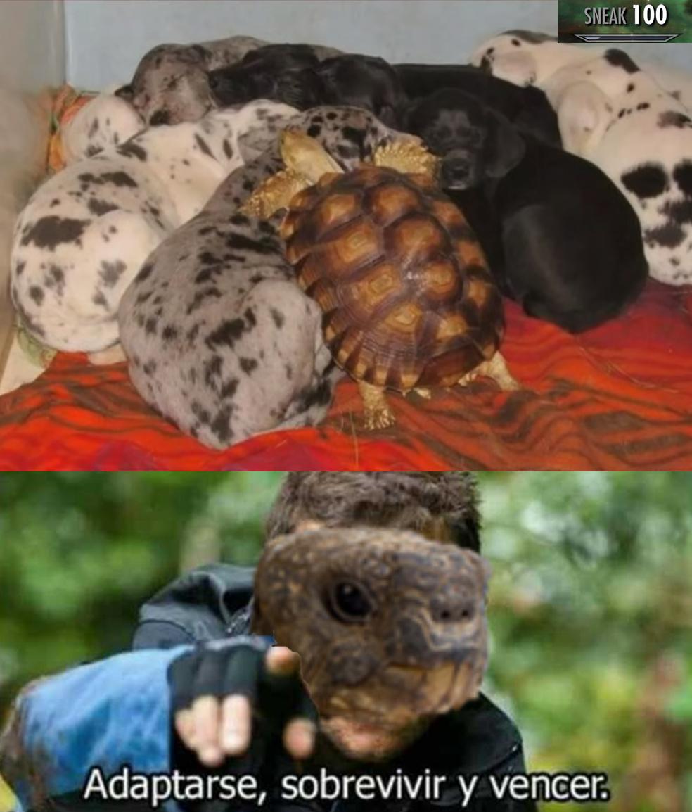 !¡that turtle is a spy!¡ - meme