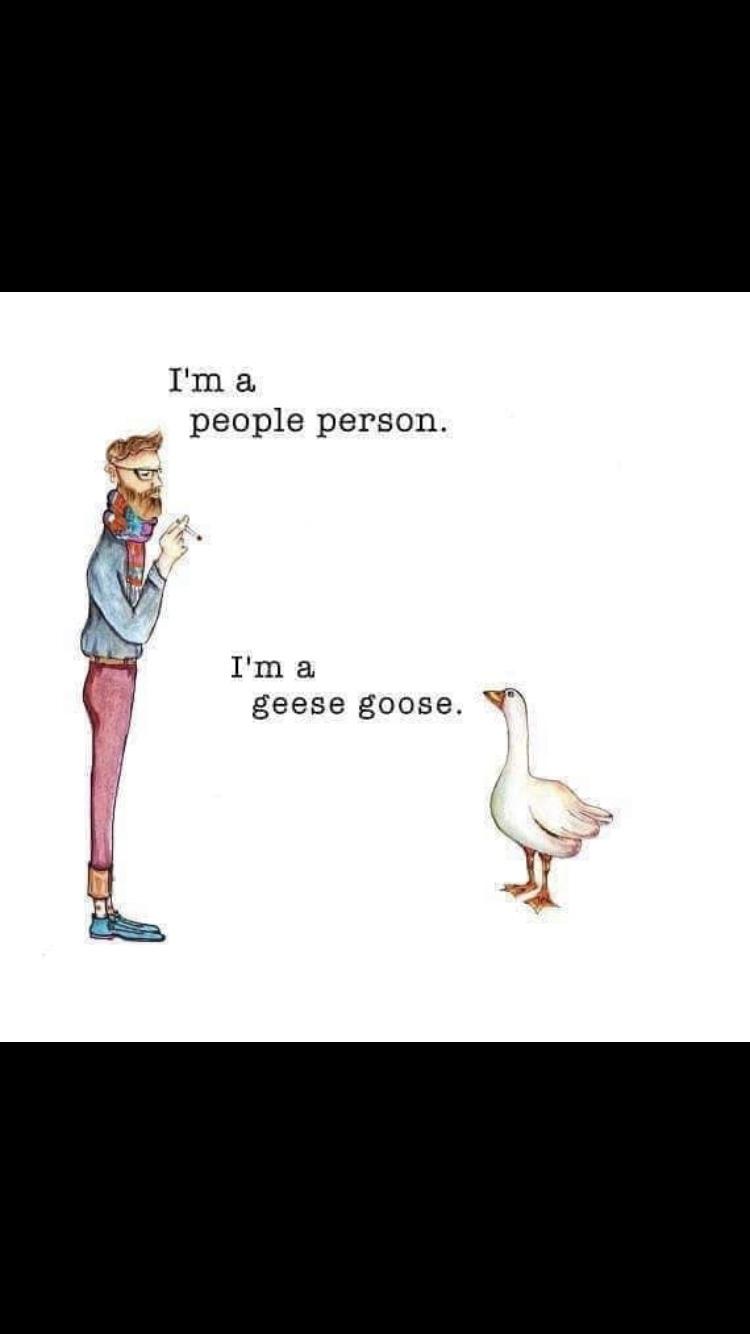 duck, duck... - meme
