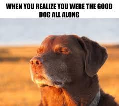 Such a smart dog - meme