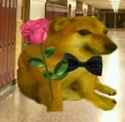 Perrimto bomnito te quiere darm unma flor - meme