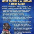 a dogs guide