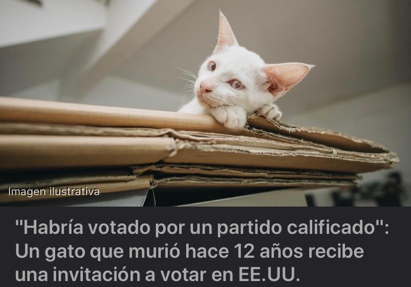 el gatito votante ya no está - meme