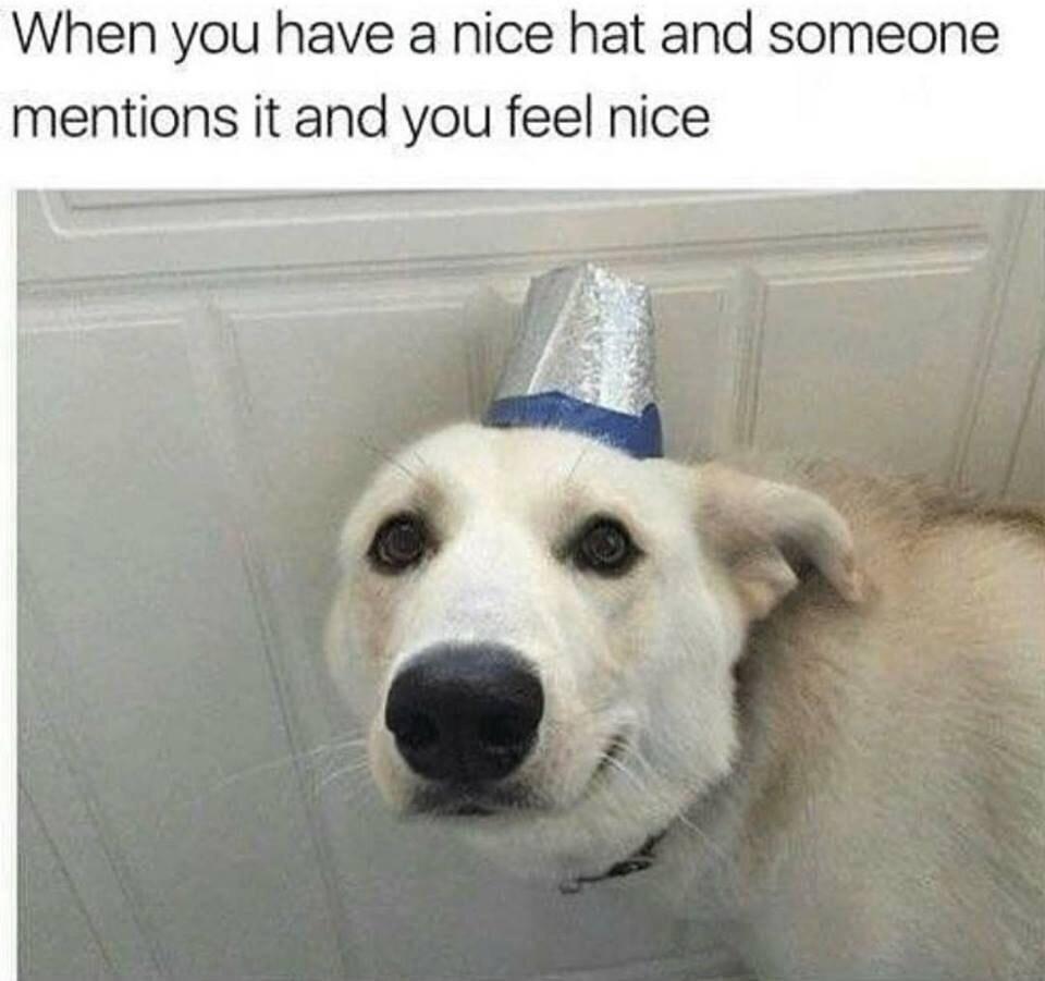 nice hat doggo - meme