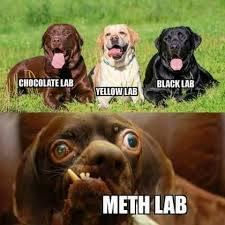 Do you like labs - meme