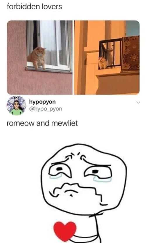 Wherefore art thou my love - meme