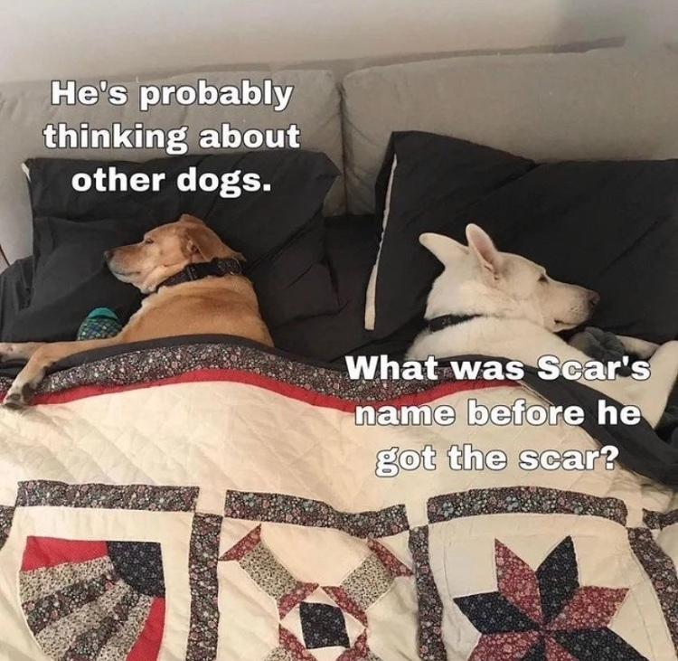 perfect bed - meme