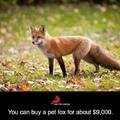 """look up """"fox go floof"""" on YouTube"""