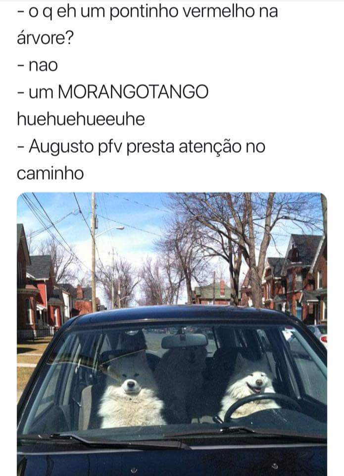 Morangotango - meme