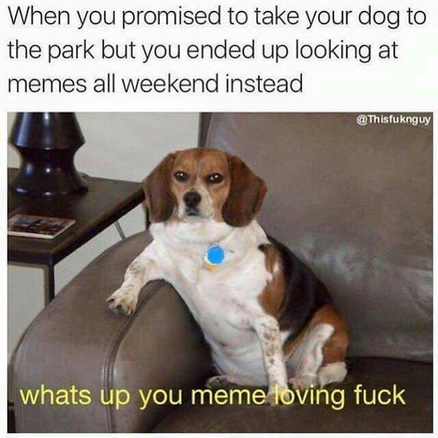 Meme lovers