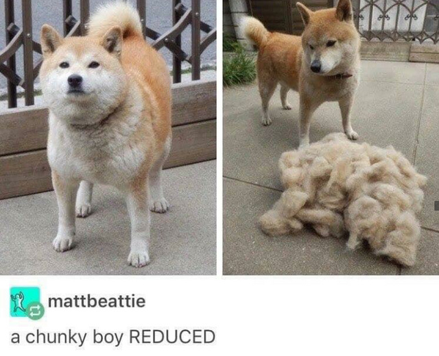 Chunky boy reduced - meme