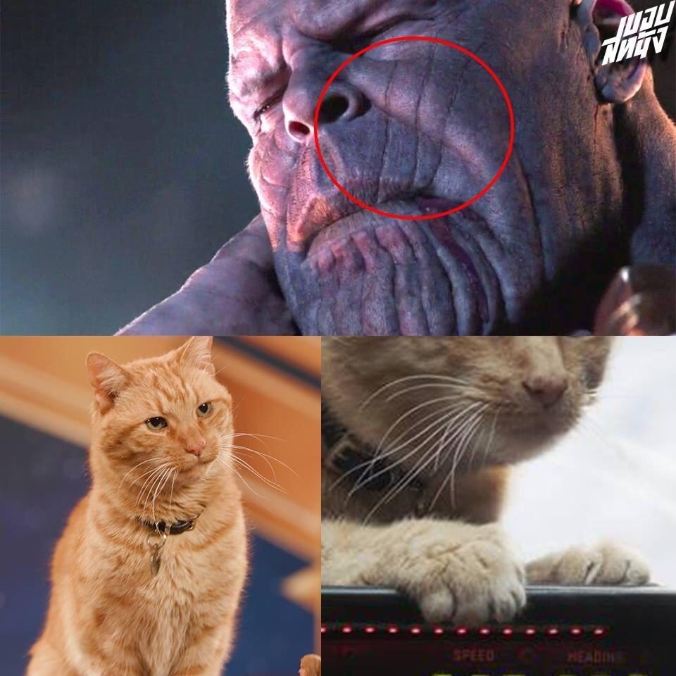 Marvel or Marvel - meme
